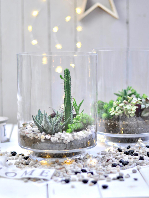 Mini Sukkulenten Terrarium